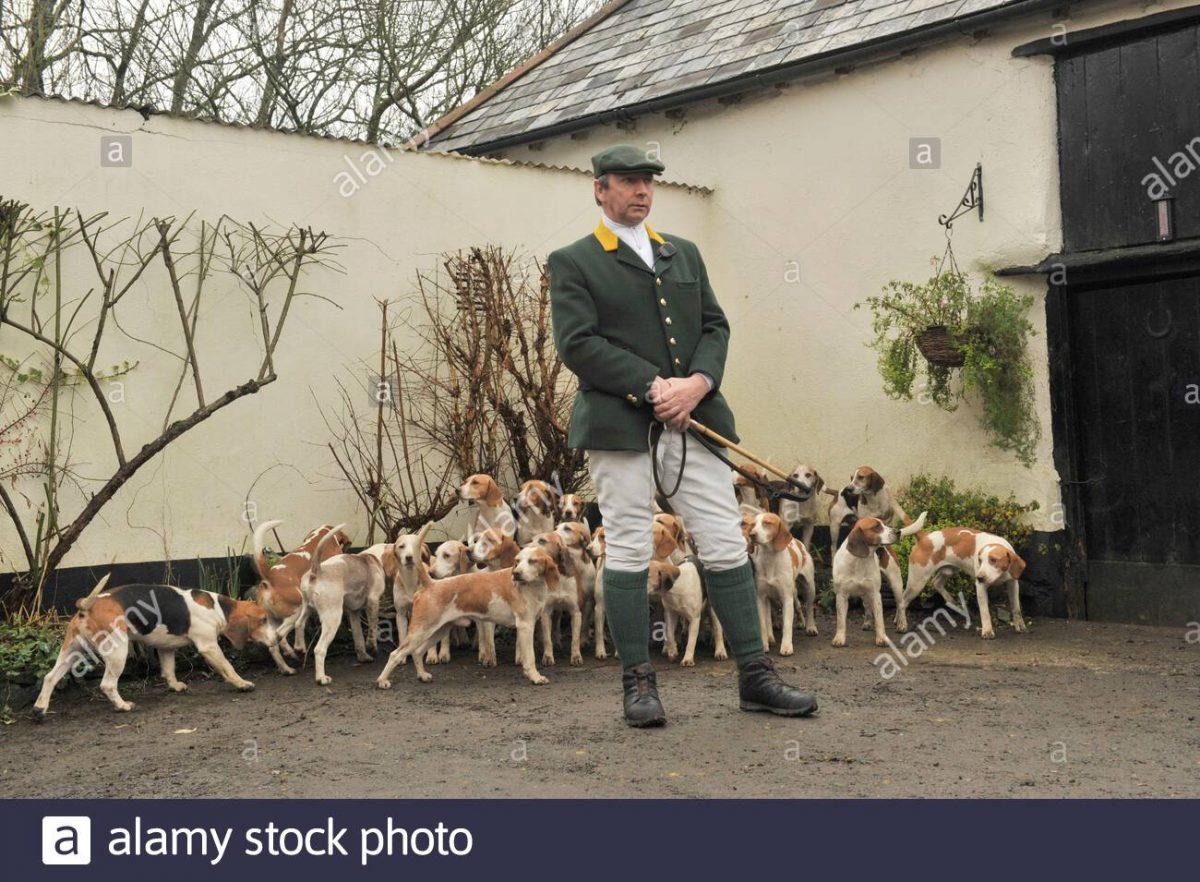 Hunting Beagles High Resolution Stock Photography and Images - Alamy
